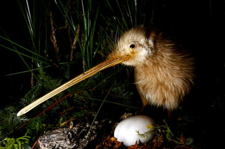 KiwiSaver - Your Nest Egg