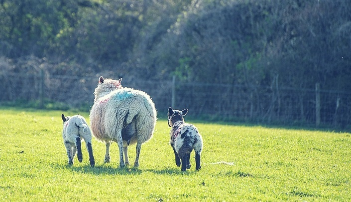 Negotiating your home loan? Don't be sheepish!